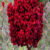 sumac-plant
