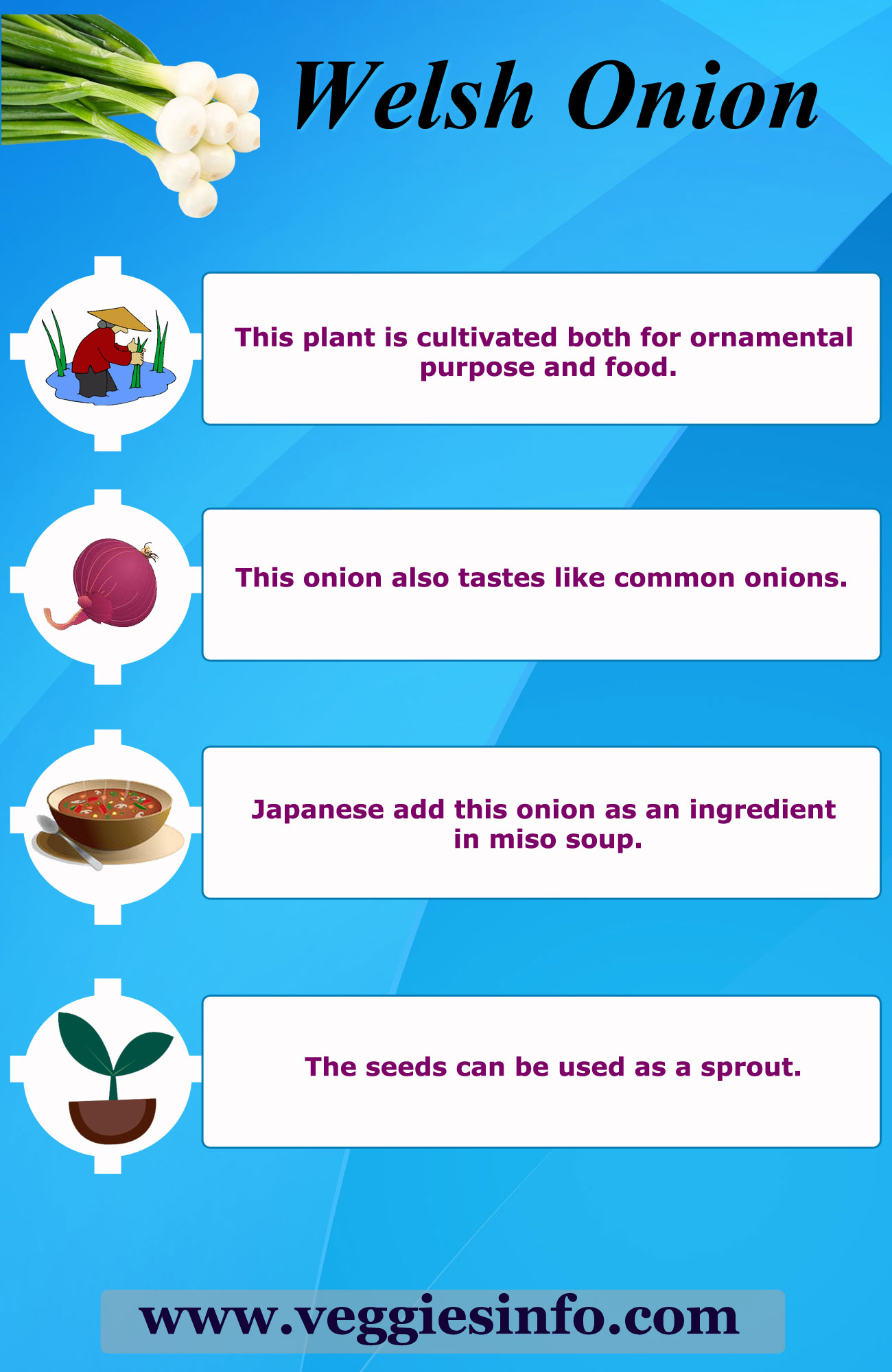 Uses of Welsh Onion