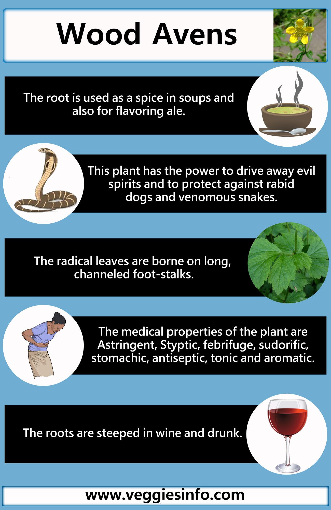 Health Benefits of Wood Avens