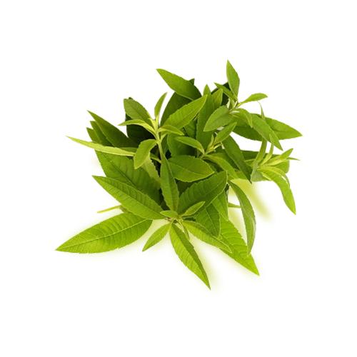 Lemon Verbena Medicinal Facts And Effects