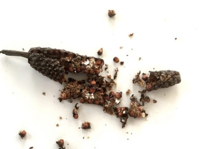 Long Pepper Medicinal And Dietary Uses
