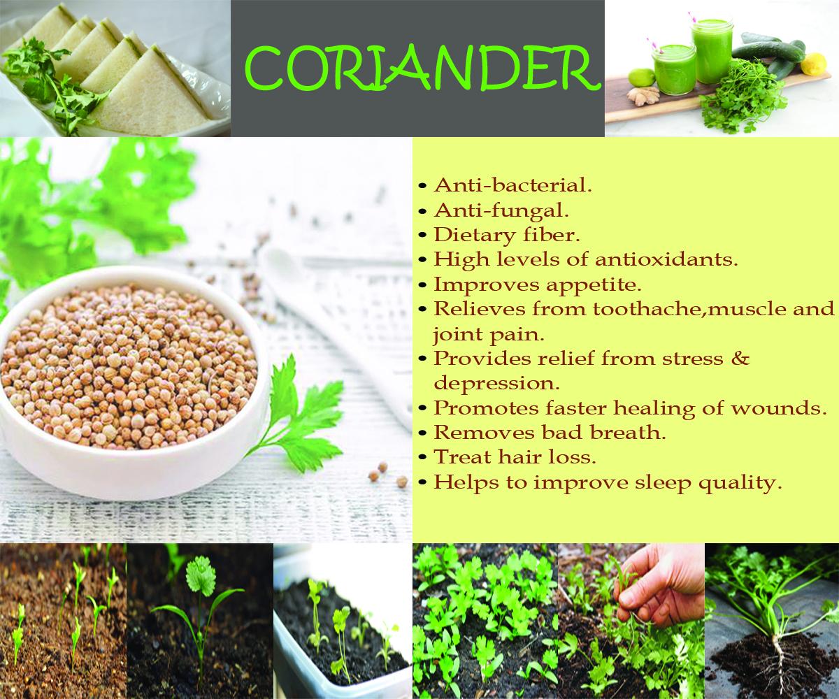 coriander-health-benefits