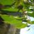 olida-plant