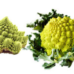 Brocco Flower