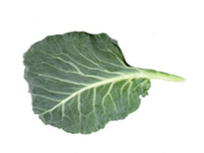 Collard Greens – Nutrition Facts and Health Guide