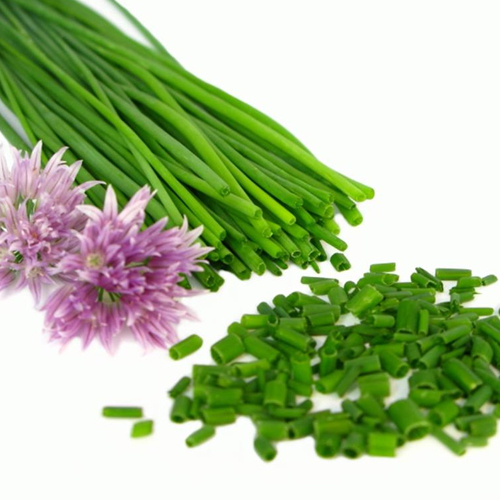 Chives Long-Awaited Health Benefits And Medicinal Uses Exposed Here!